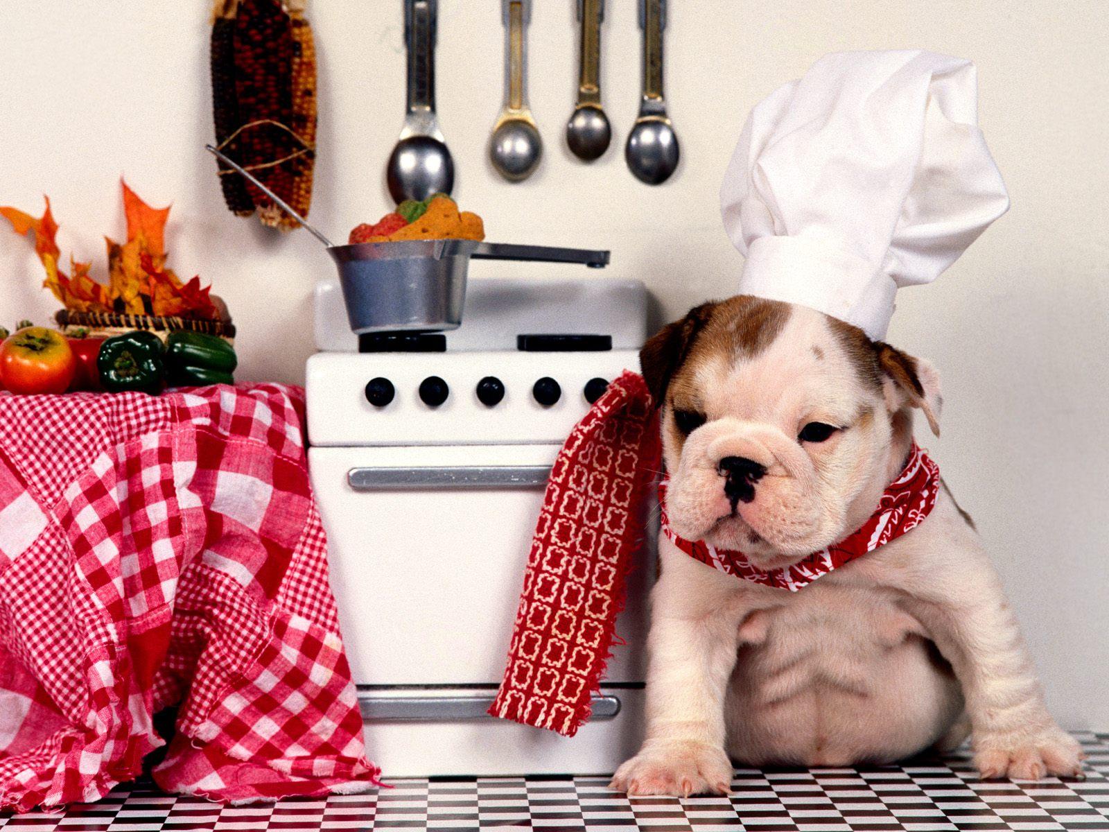 Jídla a potraviny, která by psi neměli nikdy jíst.